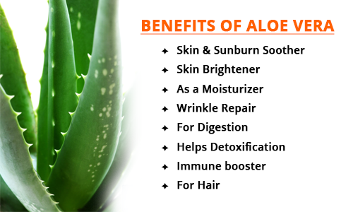 Know About the endless benefits of aloe vera!