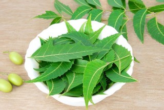 Benefits of Neem for Health