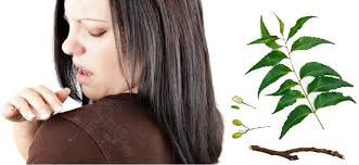 Health and Skin Benefits of Using Neem on a Dialy Basis