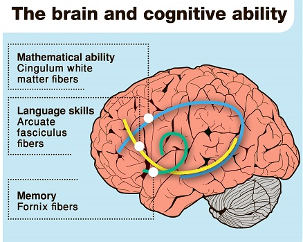 Affects Cognition and Memory