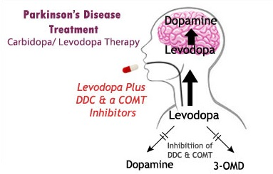 Parkinson S Disease Its Symptoms Treatment And Medication