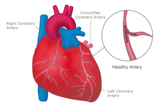 Heart and Blood Vessel - InlifeHealthCare