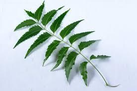 Neem for skin care and psoriasis