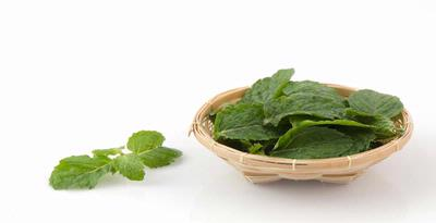 Use Mint leaves for menstrual cramps