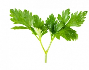 parsley for Chest Congestion Relief