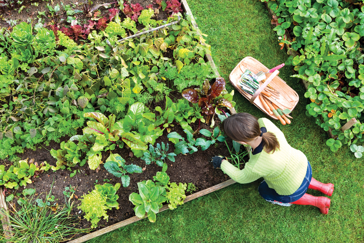 Kitchen Gardens How Cultivating An Urban Kitchen Garden Bring Positivity To Your