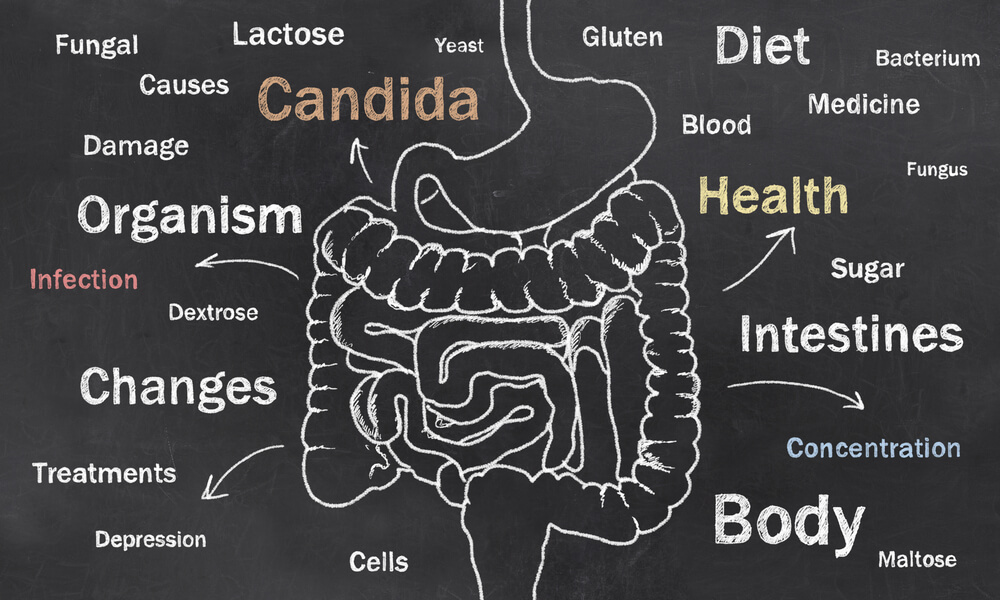 High fiber-diet and gut bacteria - Have we missed something?