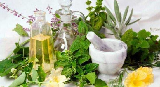 Top brain-boosting herbs you ought to know!