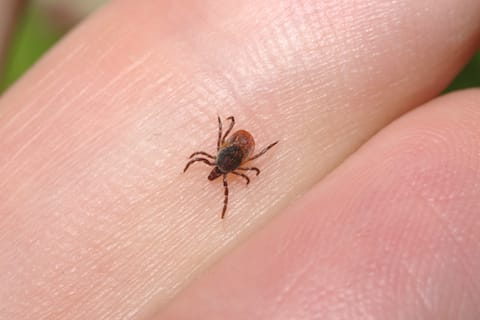 What should you know about Lyme disease?