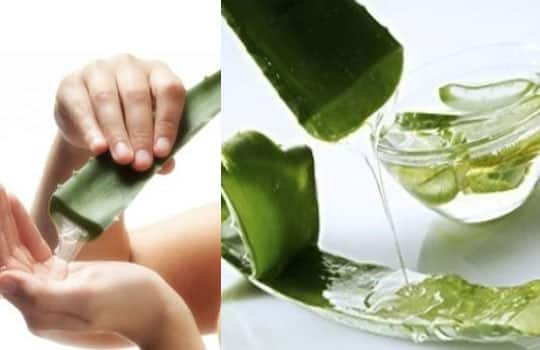 How Can You Use Aloe Vera to Treat Facial Wrinkles