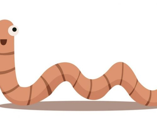 Home Remedies To Treat Pinworms