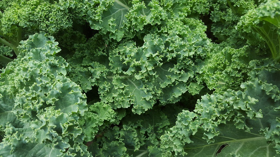 Kale and other green leafy vegetables