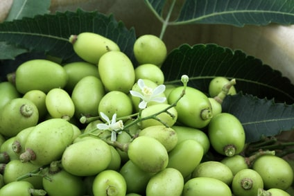 How Neem Seed Oil Is Useful?