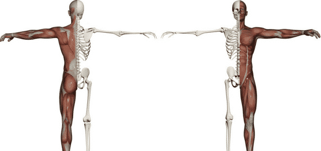 Bones, Muscles & Joints