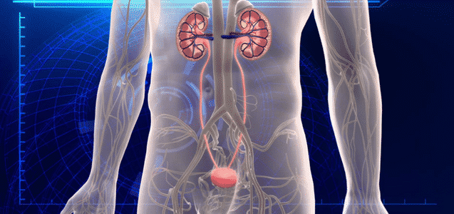 Kidneys and Urinary Tract