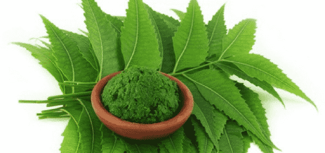 Neem To Avoid White Coated Tongue